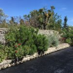 Aromatic plants Paxos cottage