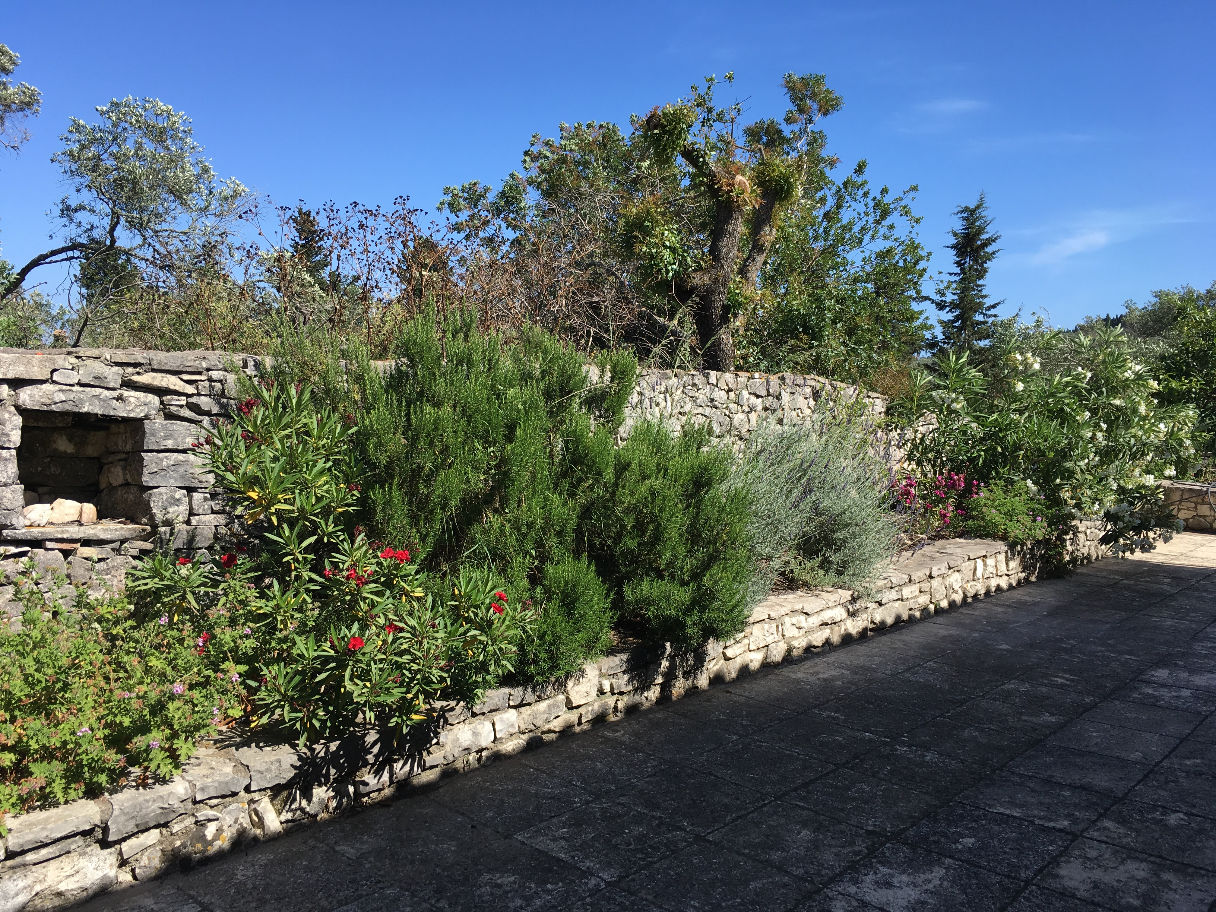 Aromatic plants Paxos cottage